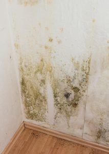 it is important for you to understand these different types of mold and what it means if you find them in your home.